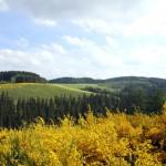 Duitsland-natuur-reizende-vegetarier