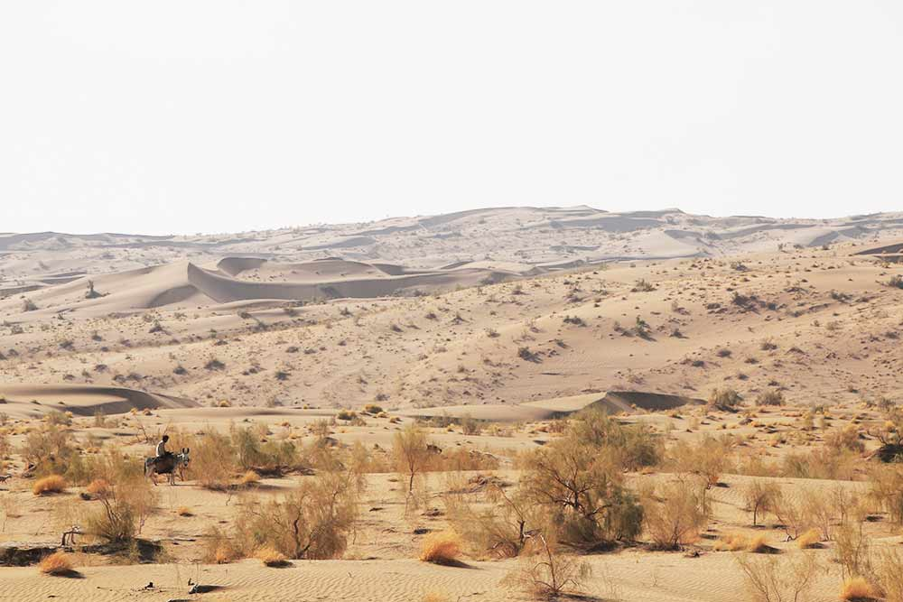woestijn-iran-ezel