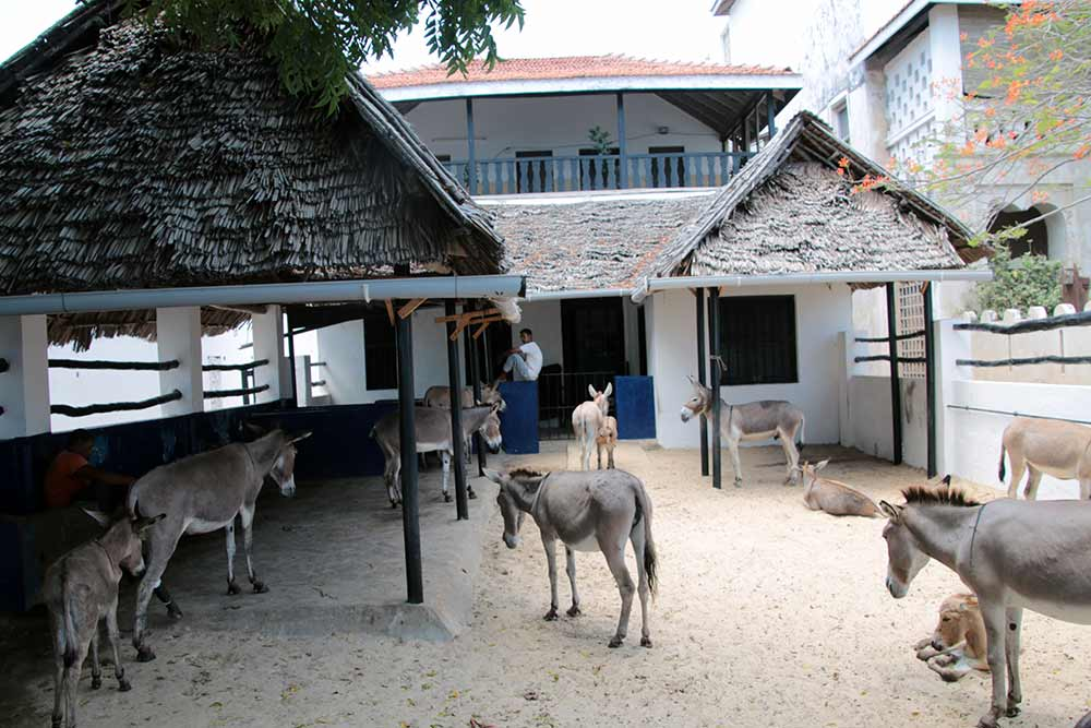 lamu-donkey