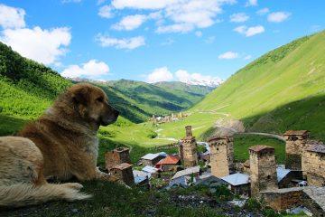 mestia-sventie-ushguli-hond